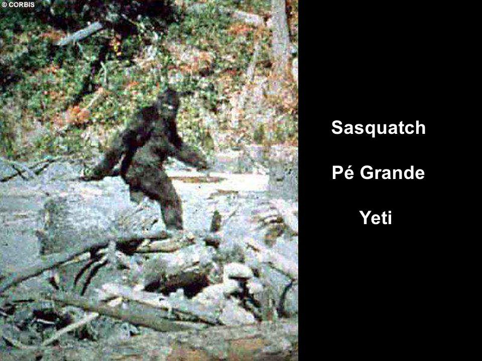 Sasquatch Pé Grande Yeti