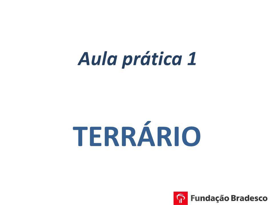 Aula prática 1 TERRÁRIO