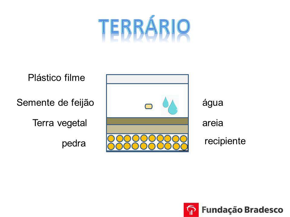 Terrário Plástico filme Semente de feijão água Terra vegetal areia