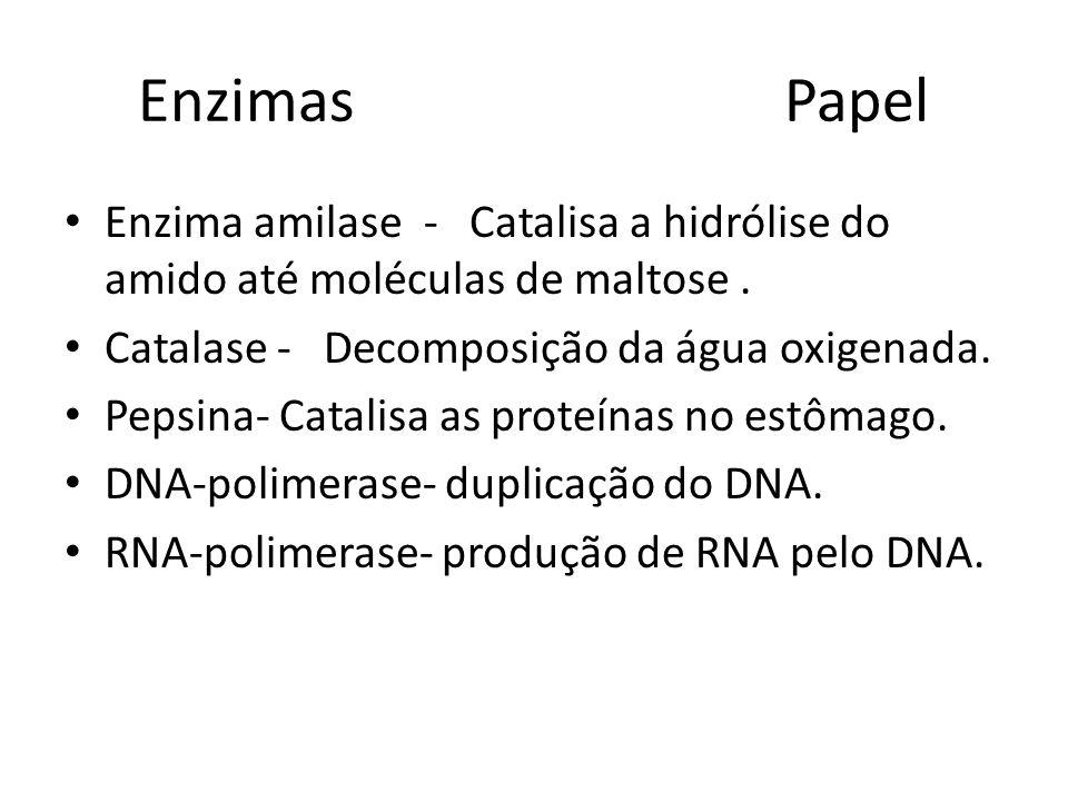 Enzimas Papel Enzima amilase - Catalisa a hidrólise do amido até moléculas de maltose .