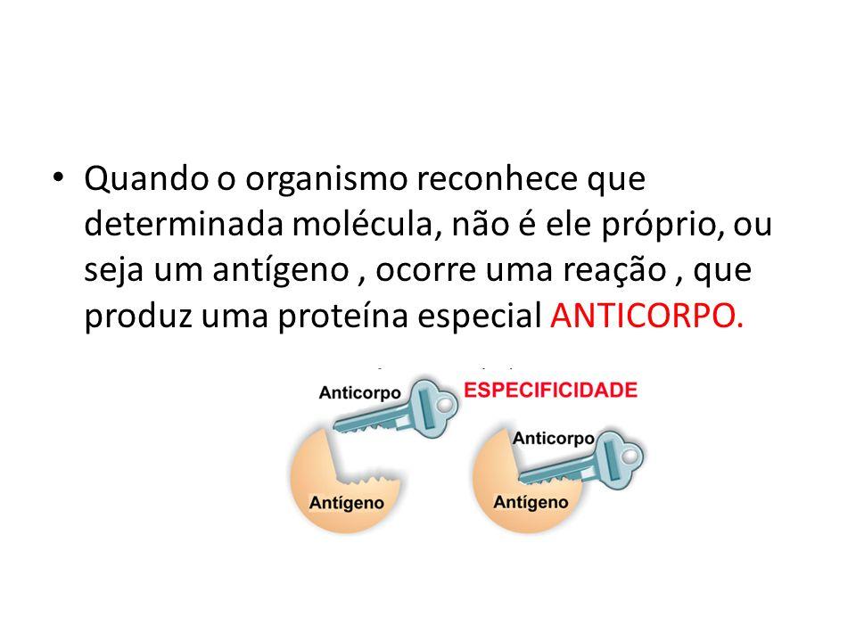 Quando o organismo reconhece que determinada molécula, não é ele próprio, ou seja um antígeno , ocorre uma reação , que produz uma proteína especial ANTICORPO.