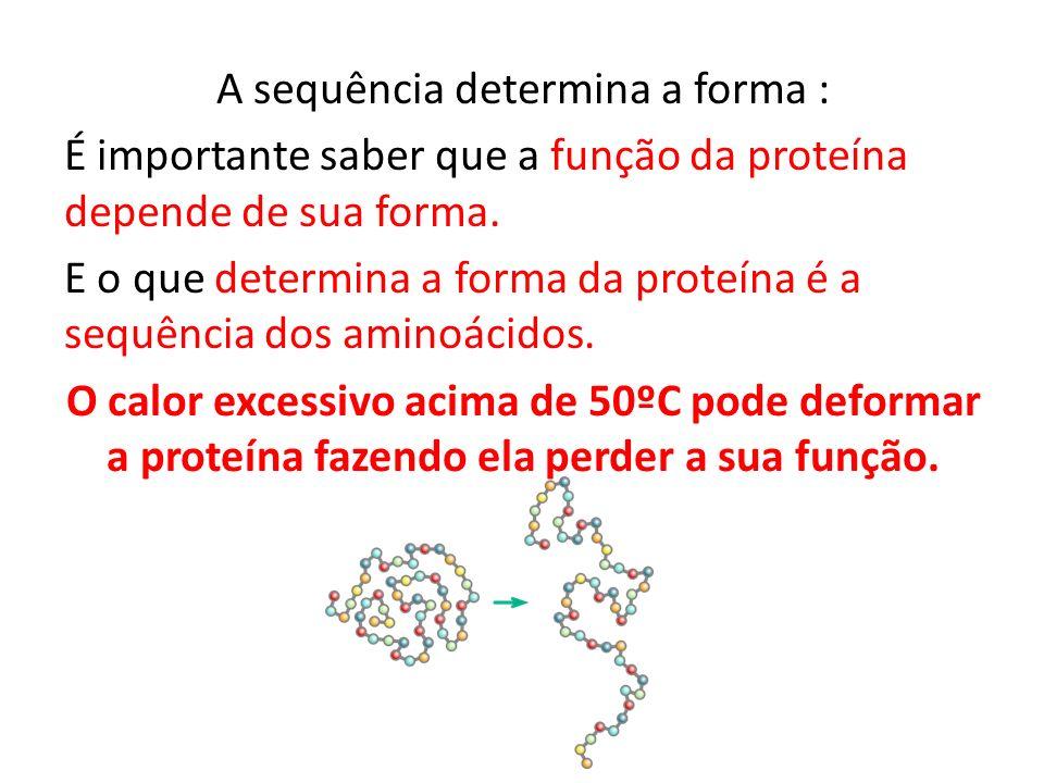 A sequência determina a forma : É importante saber que a função da proteína depende de sua forma.