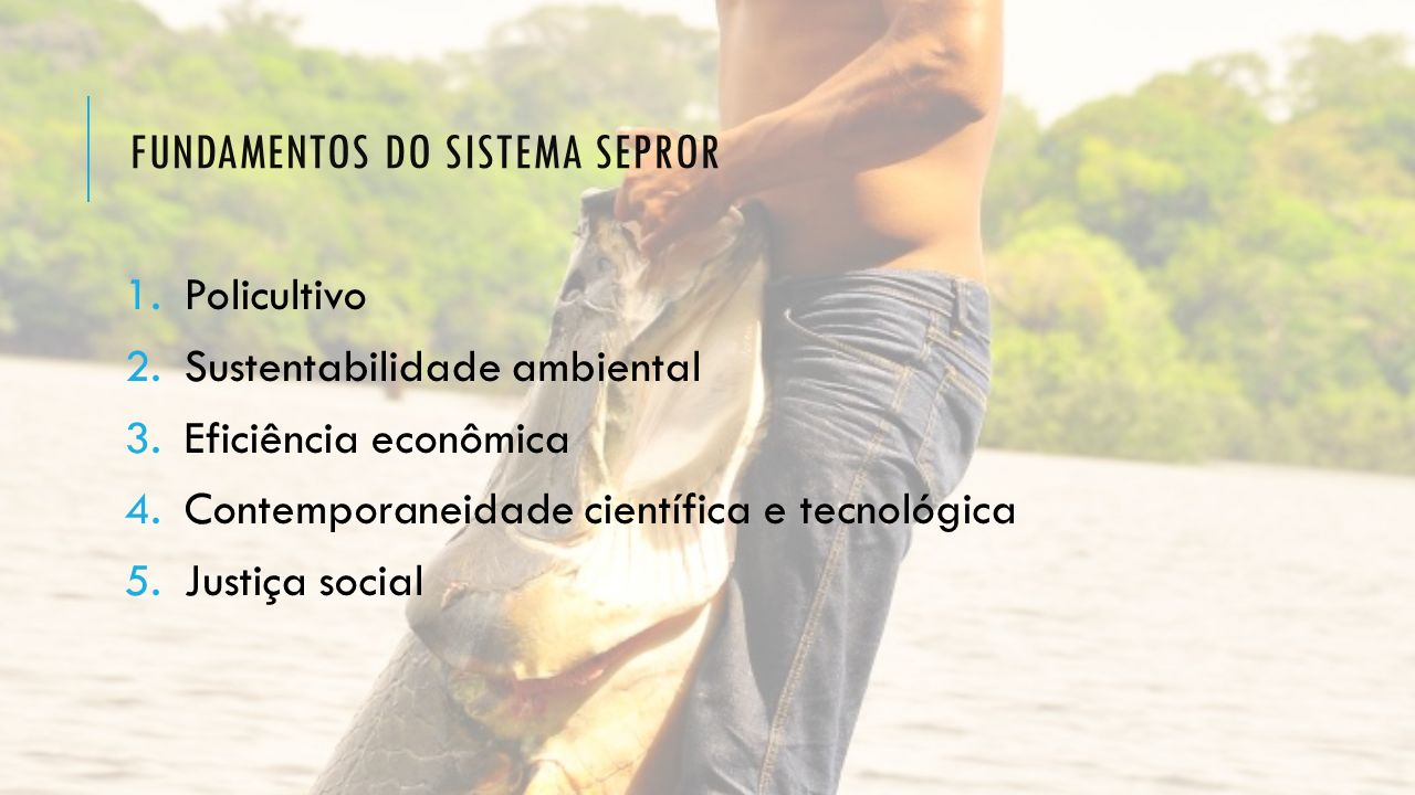 Fundamentos do sistema sepror