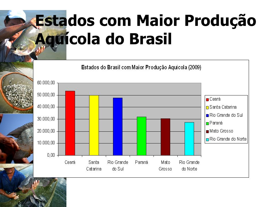 Estados com Maior Produção Aquícola do Brasil