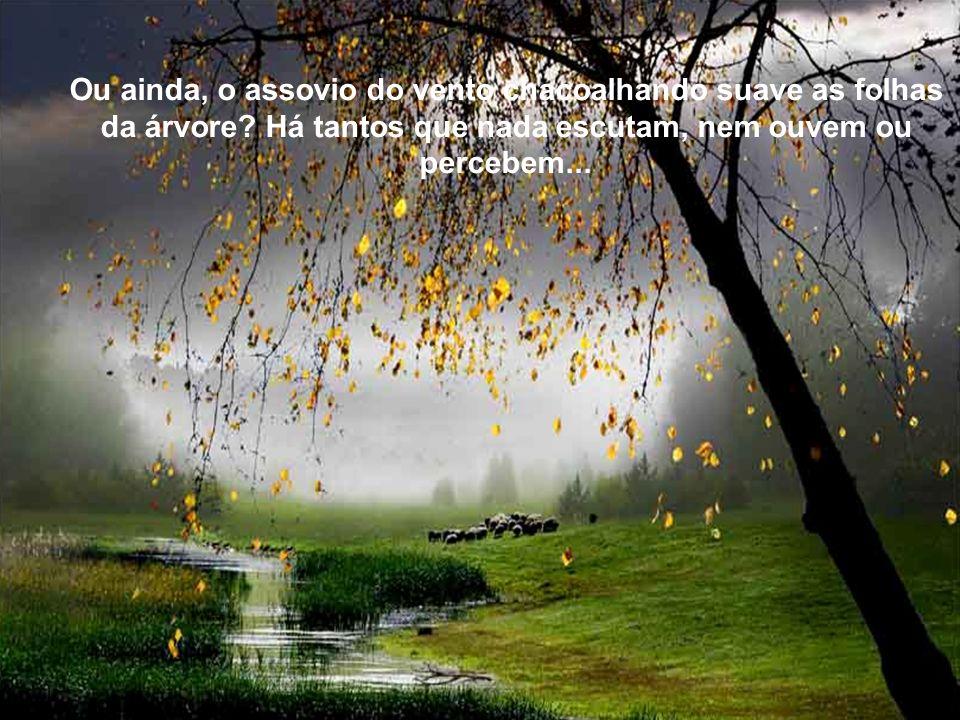 Texto Matriz Ou ainda, o assovio do vento chacoalhando suave as folhas da árvore.