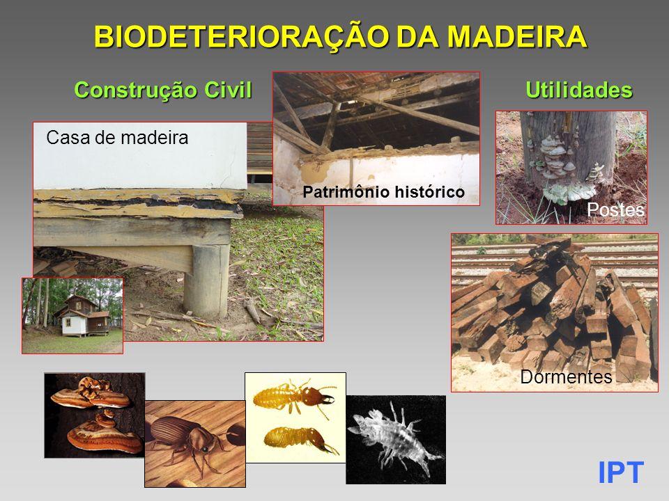 BIODETERIORAÇÃO DA MADEIRA