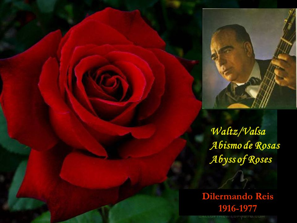 Waltz/Valsa Abismo de Rosas Abyss of Roses