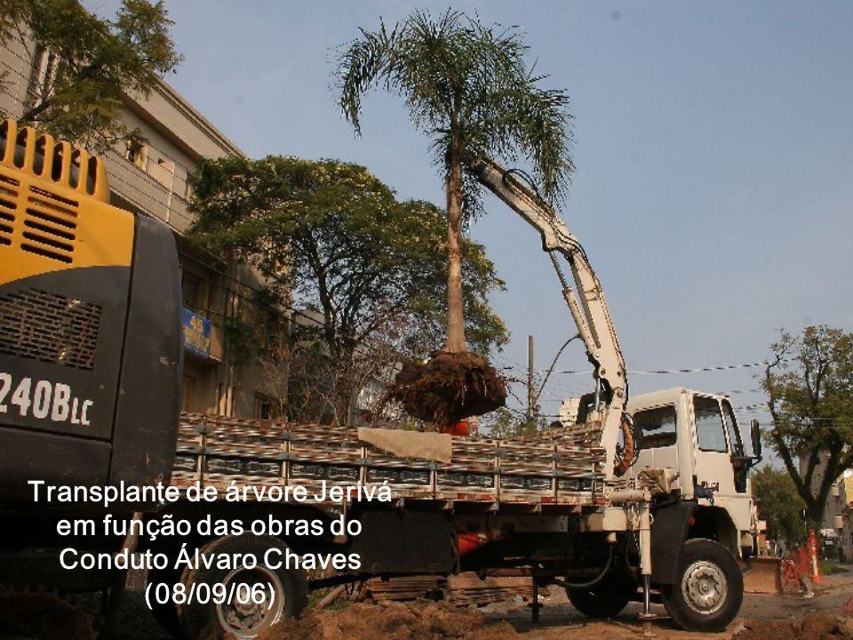 Transplante de árvore Jerivá em função das obras do Conduto Álvaro Chaves (08/09/06)