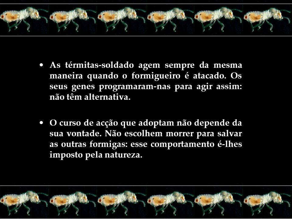 As térmitas-soldado agem sempre da mesma maneira quando o formigueiro é atacado. Os seus genes programaram-nas para agir assim: não têm alternativa.