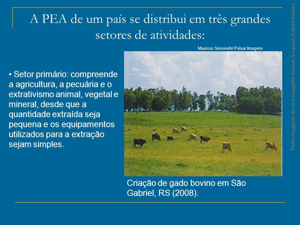 A PEA de um país se distribui em três grandes setores de atividades: