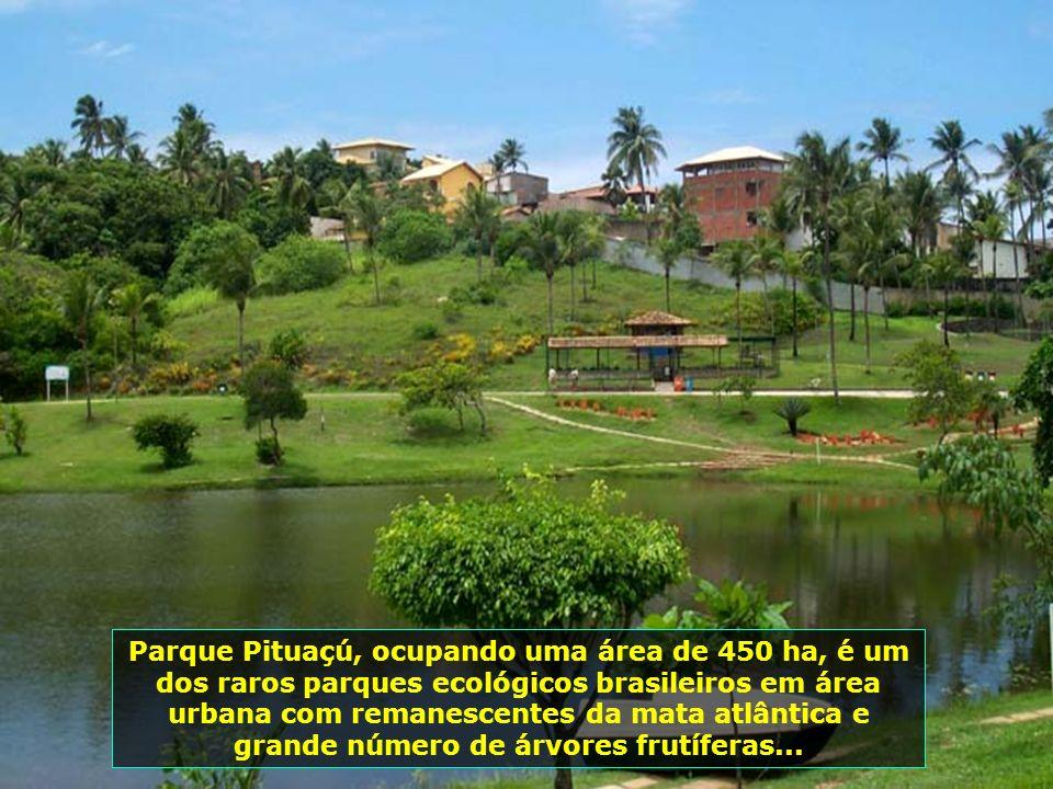 P0014244 - SALVADOR - PARQUE METROPOLITANO DE PITUAÇÚ-700