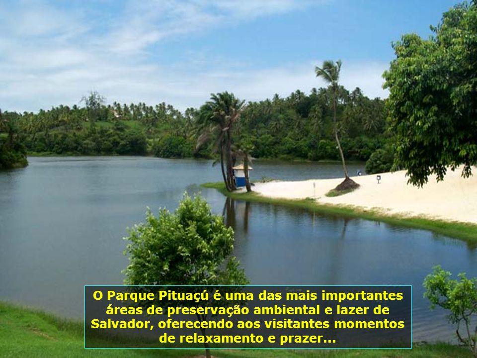 P0014245 - SALVADOR - PARQUE METROPOLITANO DE PITUAÇÚ-700