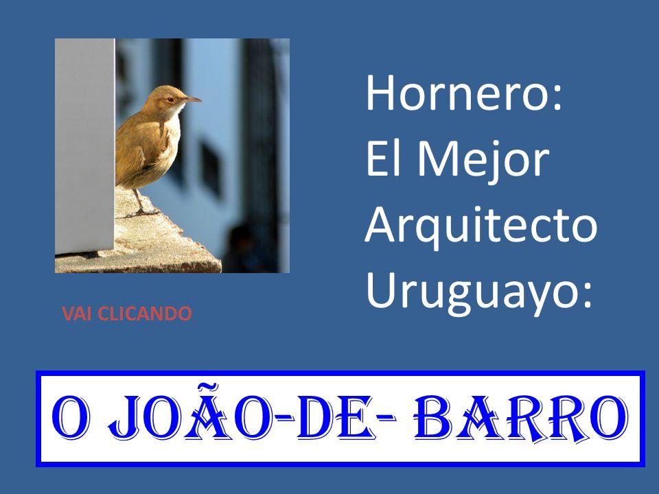 Hornero: El Mejor Arquitecto Uruguayo: VAI CLICANDO O joãO-de- barro