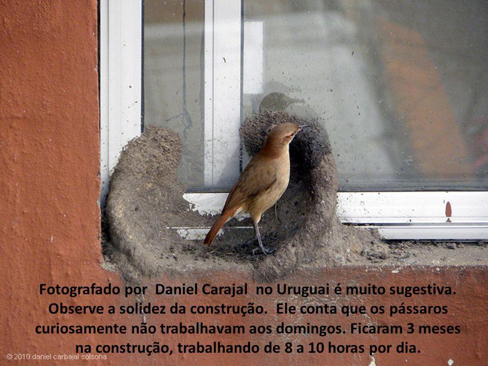 Fotografado por Daniel Carajal no Uruguai é muito sugestiva.