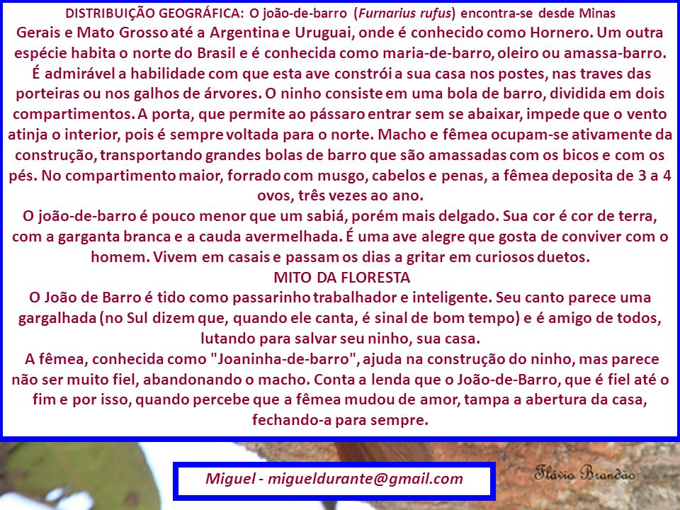 Miguel - migueldurante@gmail.com