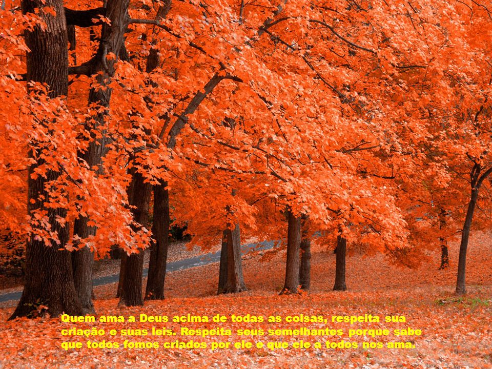 Quem ama a Deus acima de todas as coisas, respeita sua criação e suas leis.