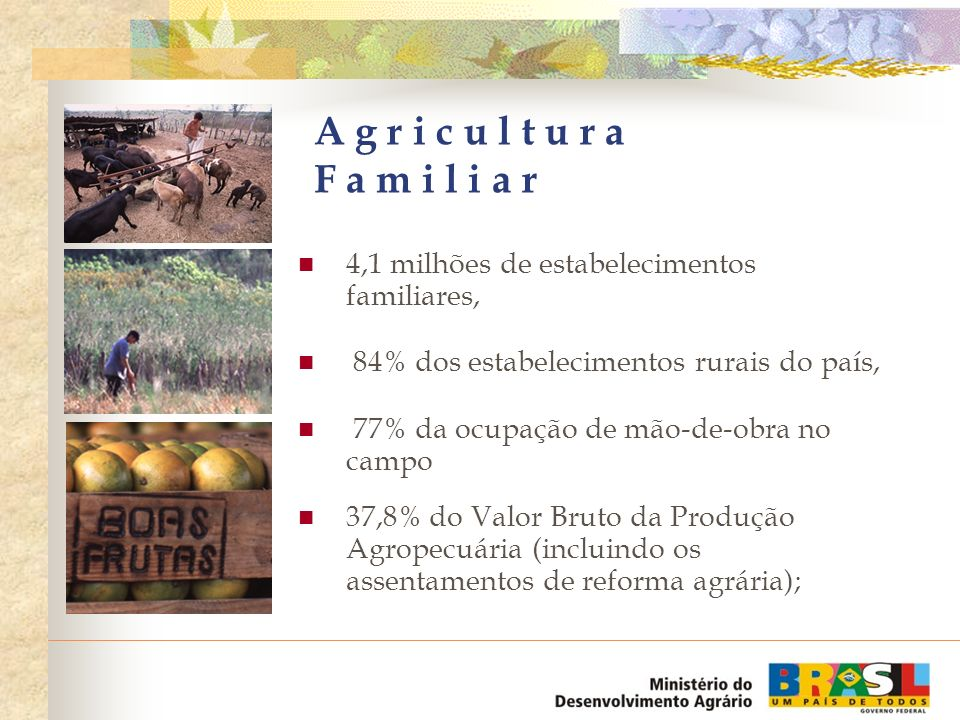 A g r i c u l t u r a F a m i l i a r 4,1 milhões de estabelecimentos familiares, 84% dos estabelecimentos rurais do país,