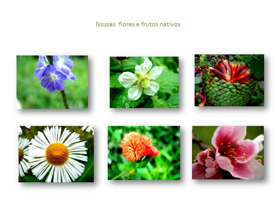 Nossas flores e frutos nativos
