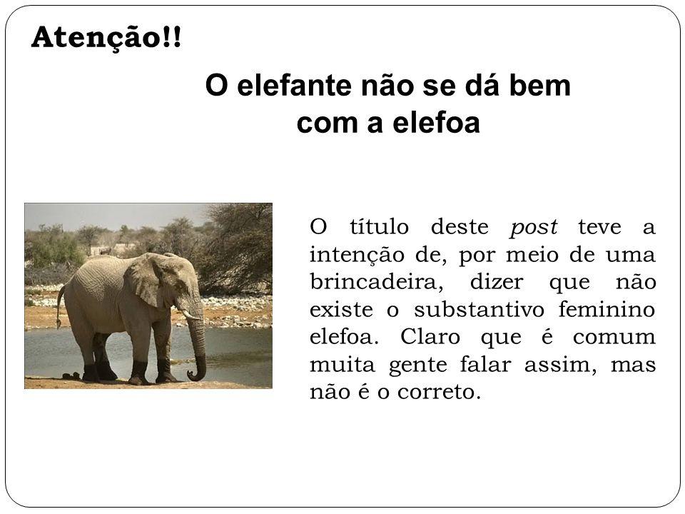 O elefante não se dá bem com a elefoa