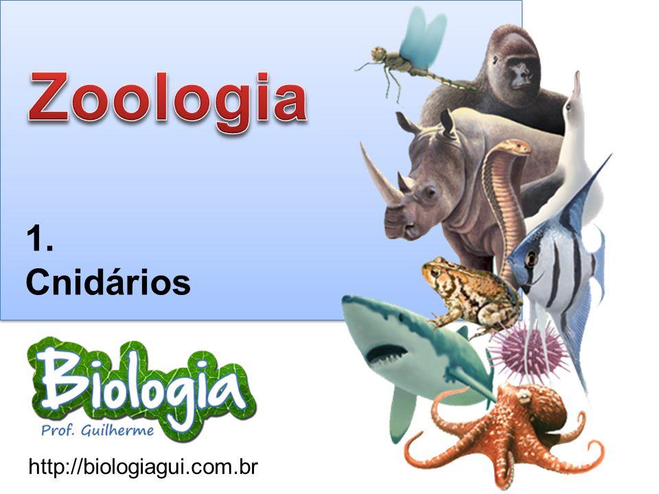 Zoologia 1. Cnidários http://biologiagui.com.br