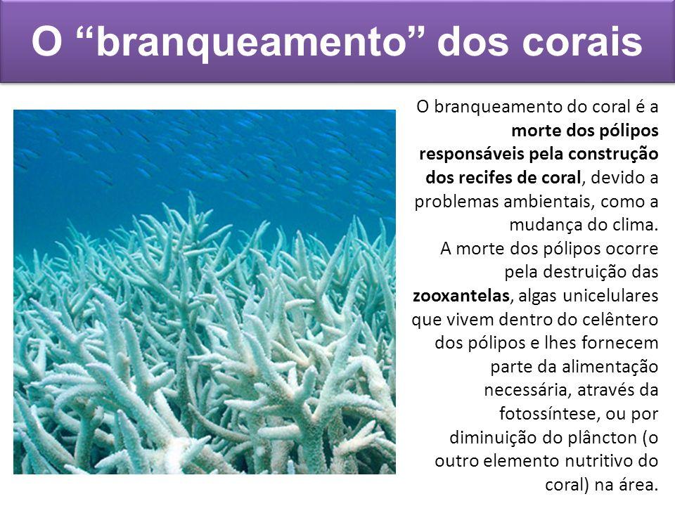 O branqueamento dos corais