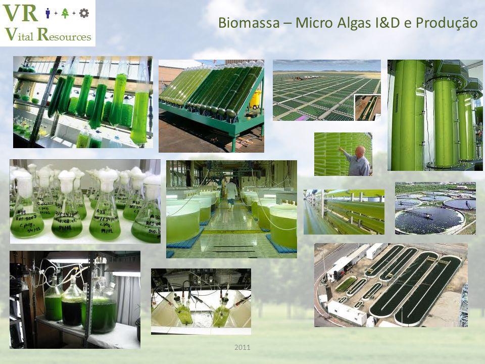 Biomassa – Micro Algas I&D e Produção