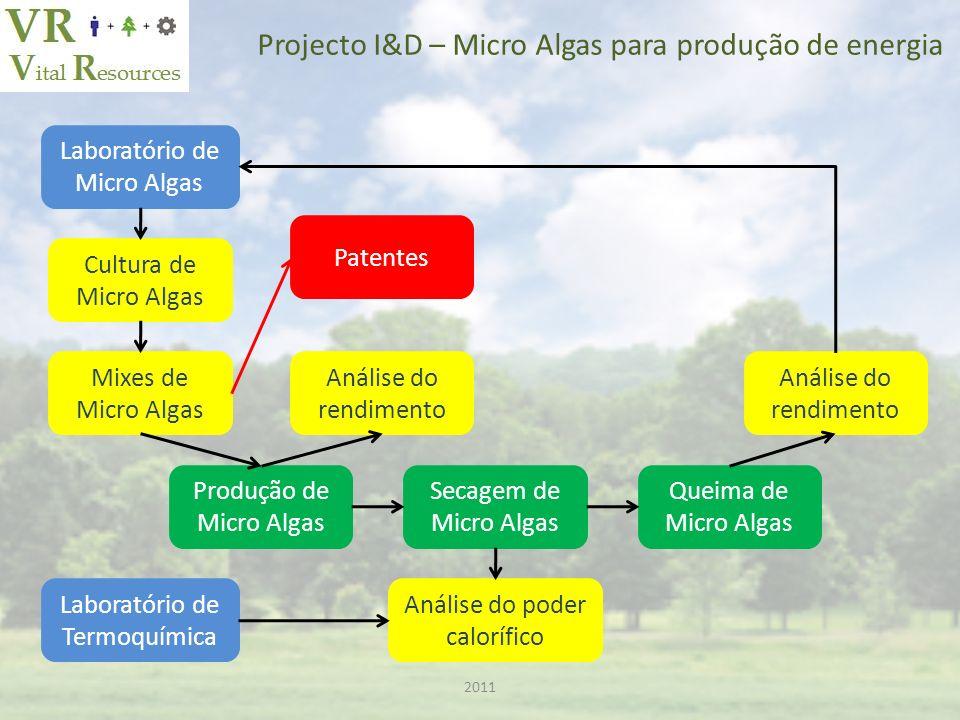 Projecto I&D – Micro Algas para produção de energia