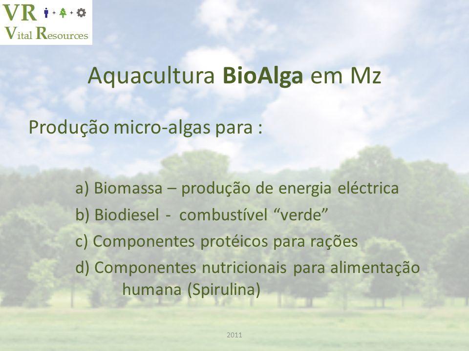 Aquacultura BioAlga em Mz