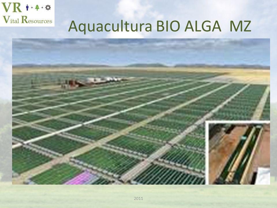 Aquacultura BIO ALGA MZ