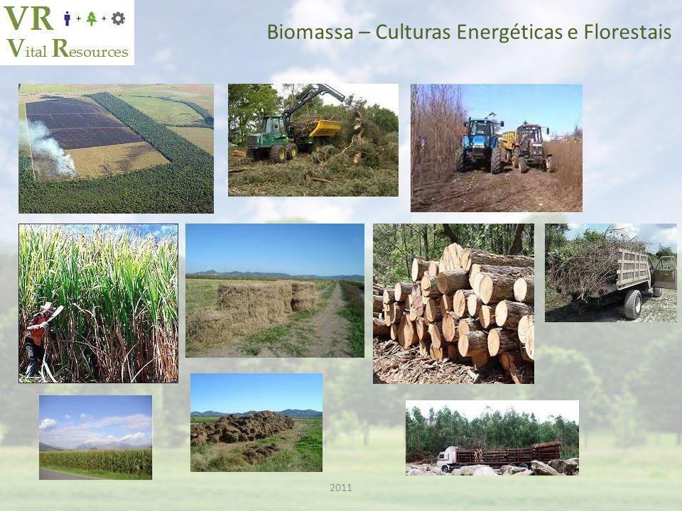 Biomassa – Culturas Energéticas e Florestais