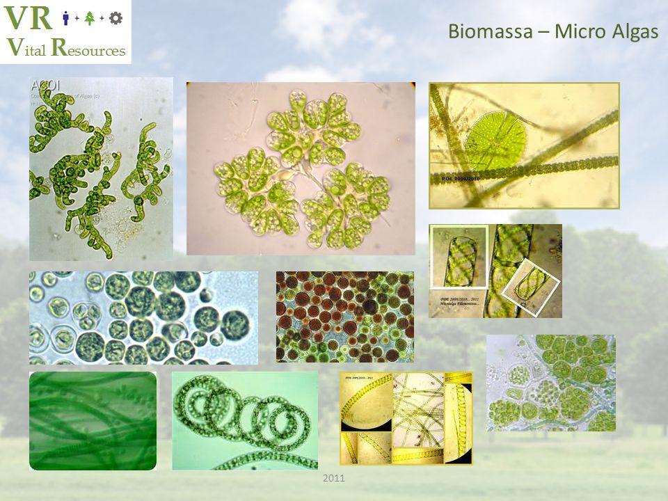 Biomassa – Micro Algas 2011