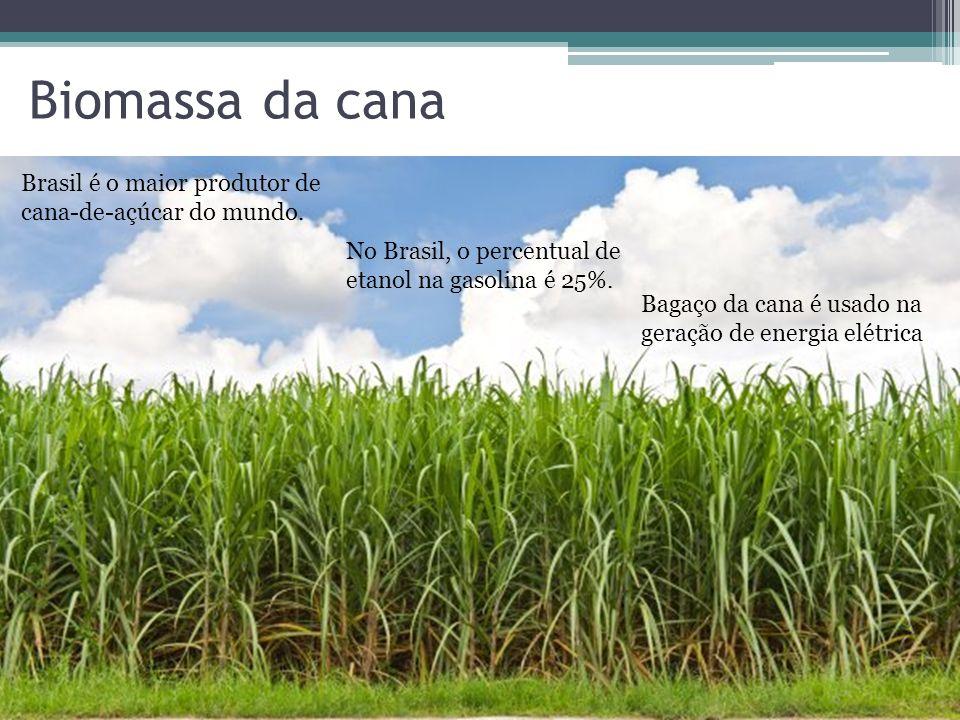 Biomassa da cana Brasil é o maior produtor de cana-de-açúcar do mundo.
