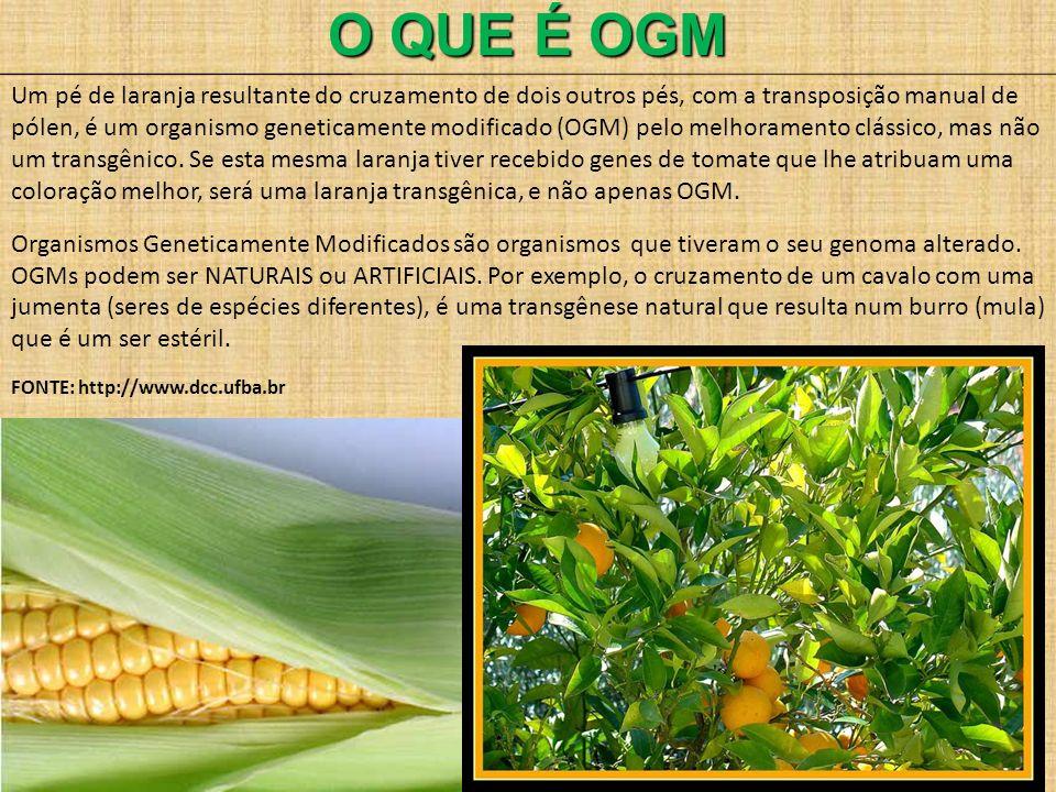 O QUE É OGM