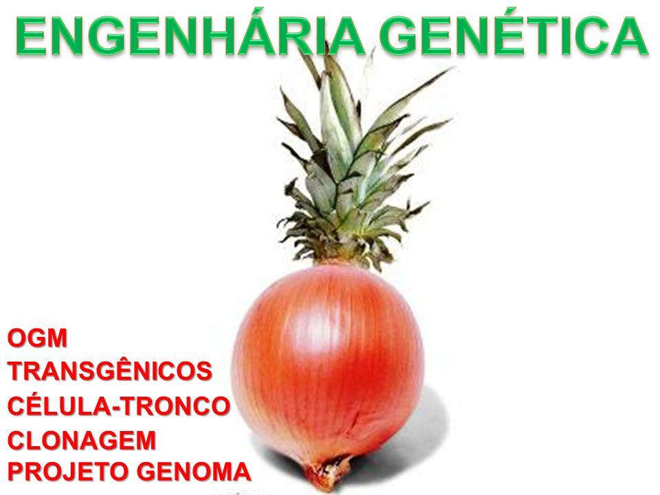 ENGENHÁRIA GENÉTICA OGM TRANSGÊNICOS CÉLULA-TRONCO CLONAGEM