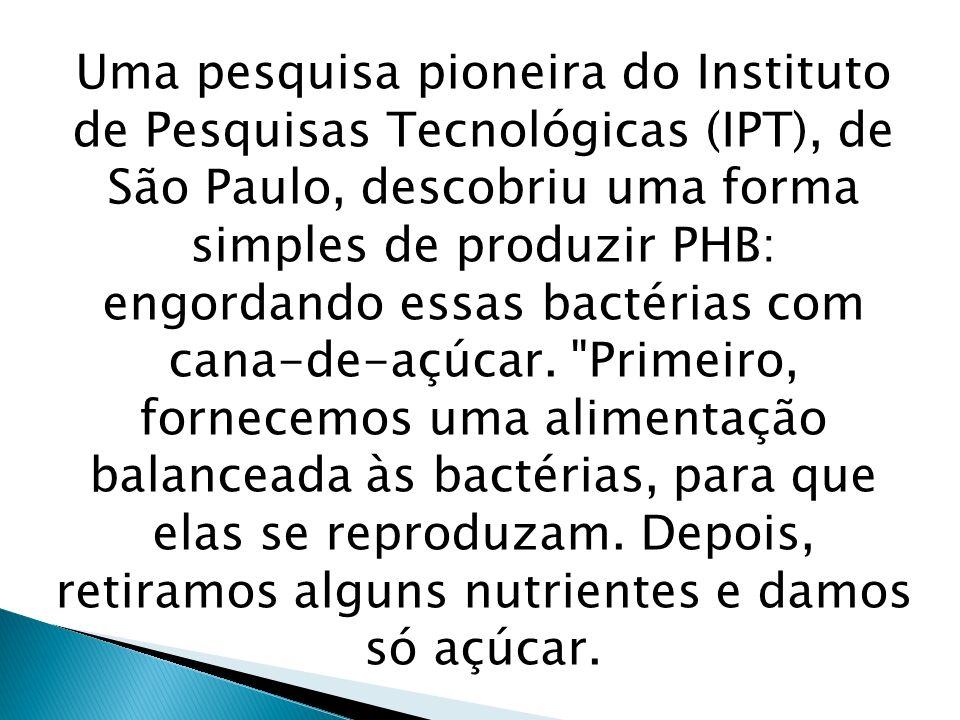 Uma pesquisa pioneira do Instituto de Pesquisas Tecnológicas (IPT), de São Paulo, descobriu uma forma simples de produzir PHB: engordando essas bactérias com cana-de-açúcar.