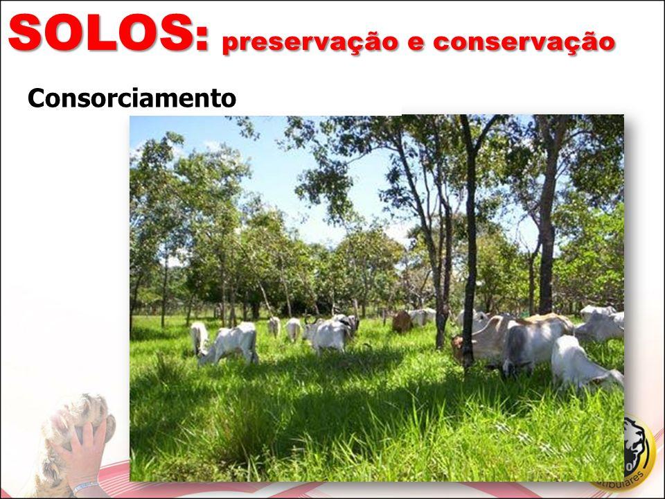 SOLOS: preservação e conservação