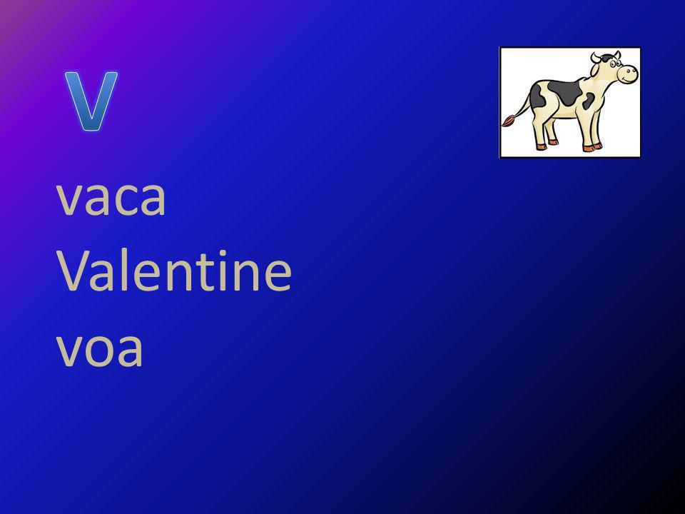 V vaca Valentine voa