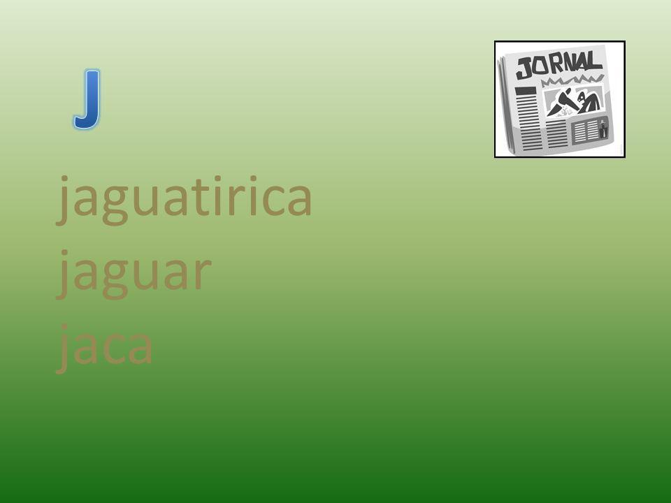 jaguatirica jaguar jaca