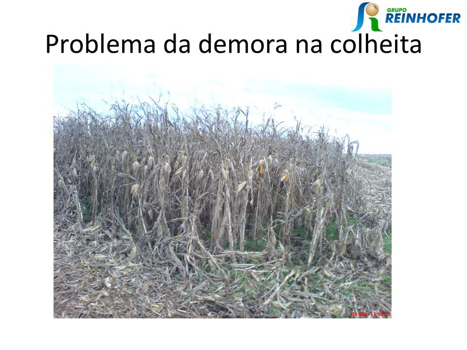 Problema da demora na colheita