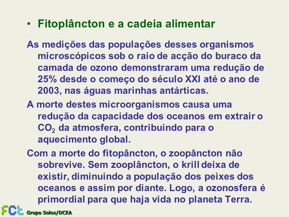 Fitoplâncton e a cadeia alimentar