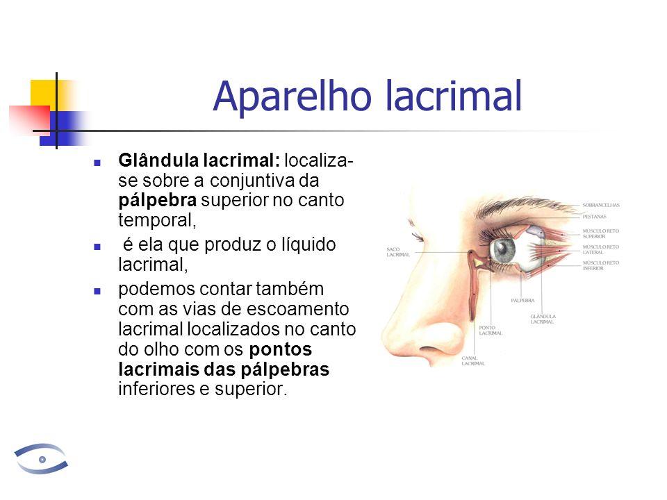 Aparelho lacrimal Glândula lacrimal: localiza-se sobre a conjuntiva da pálpebra superior no canto temporal,
