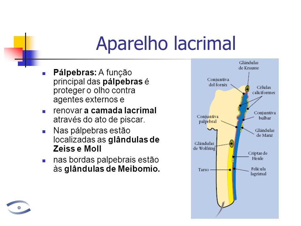 Aparelho lacrimal Pálpebras: A função principal das pálpebras é proteger o olho contra agentes externos e.