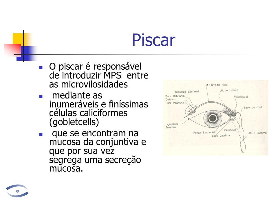 Piscar O piscar é responsável de introduzir MPS entre as microvilosidades. mediante as inumeráveis e finíssimas células caliciformes (gobletcells)