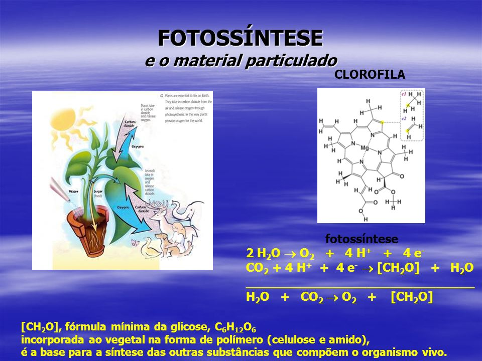 FOTOSSÍNTESE e o material particulado