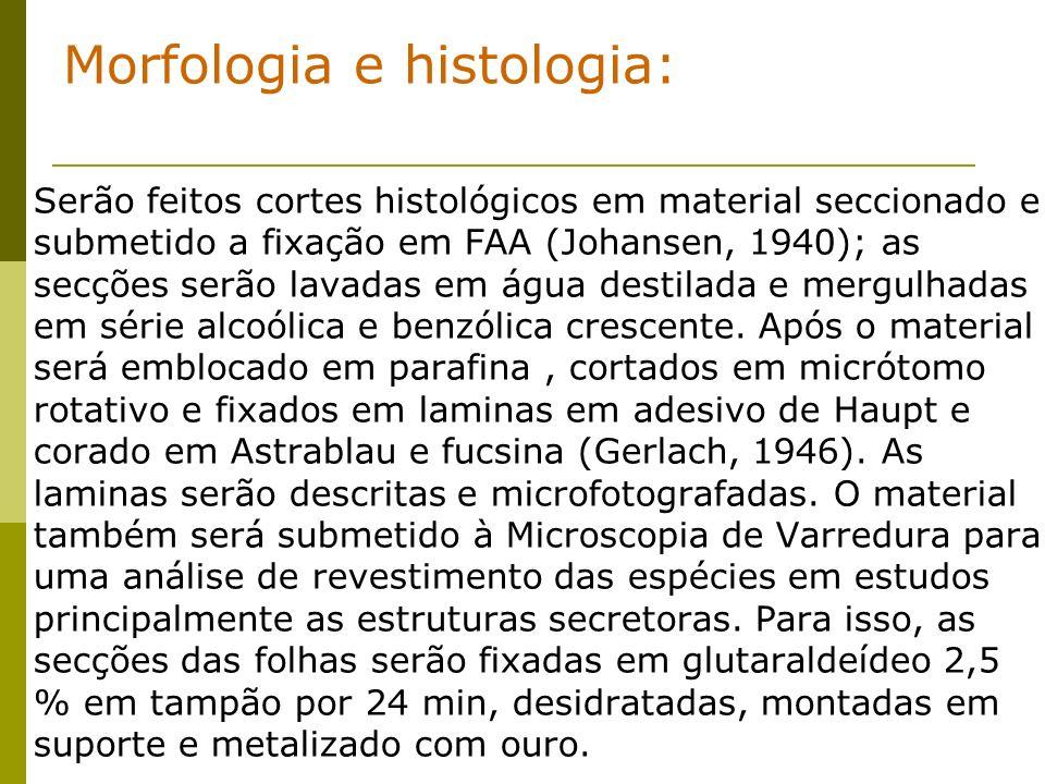Morfologia e histologia: