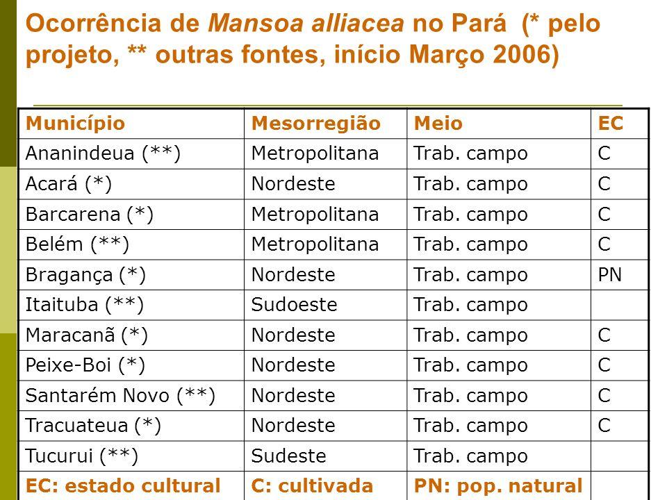 Ocorrência de Mansoa alliacea no Pará (. pelo projeto,