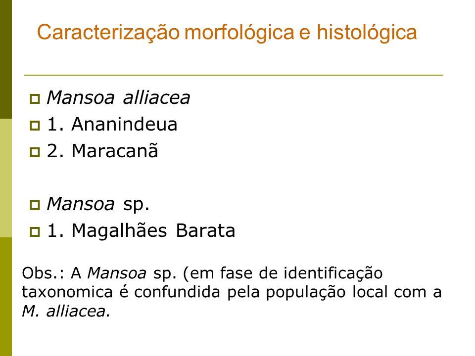 Caracterização morfológica e histológica