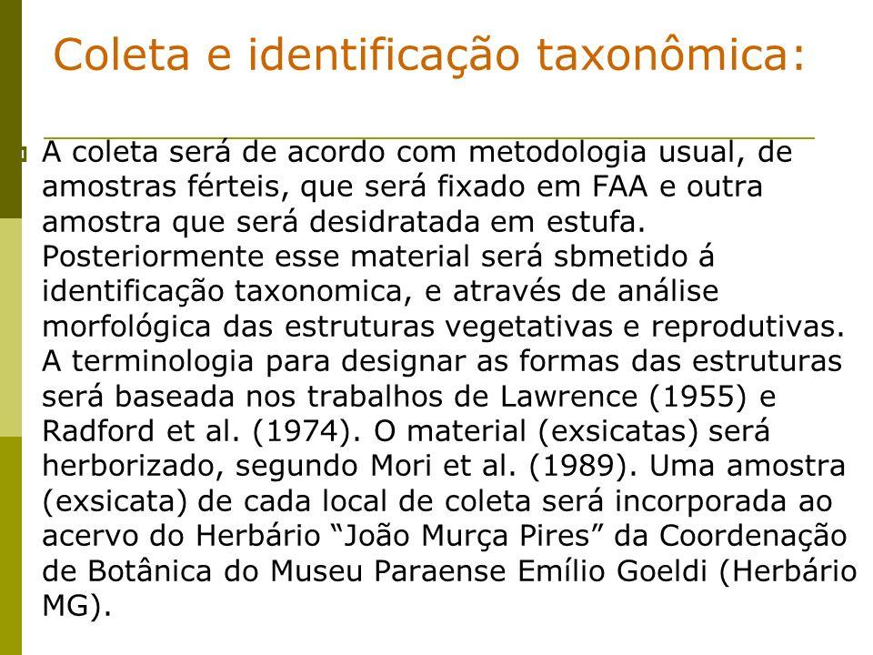 Coleta e identificação taxonômica: