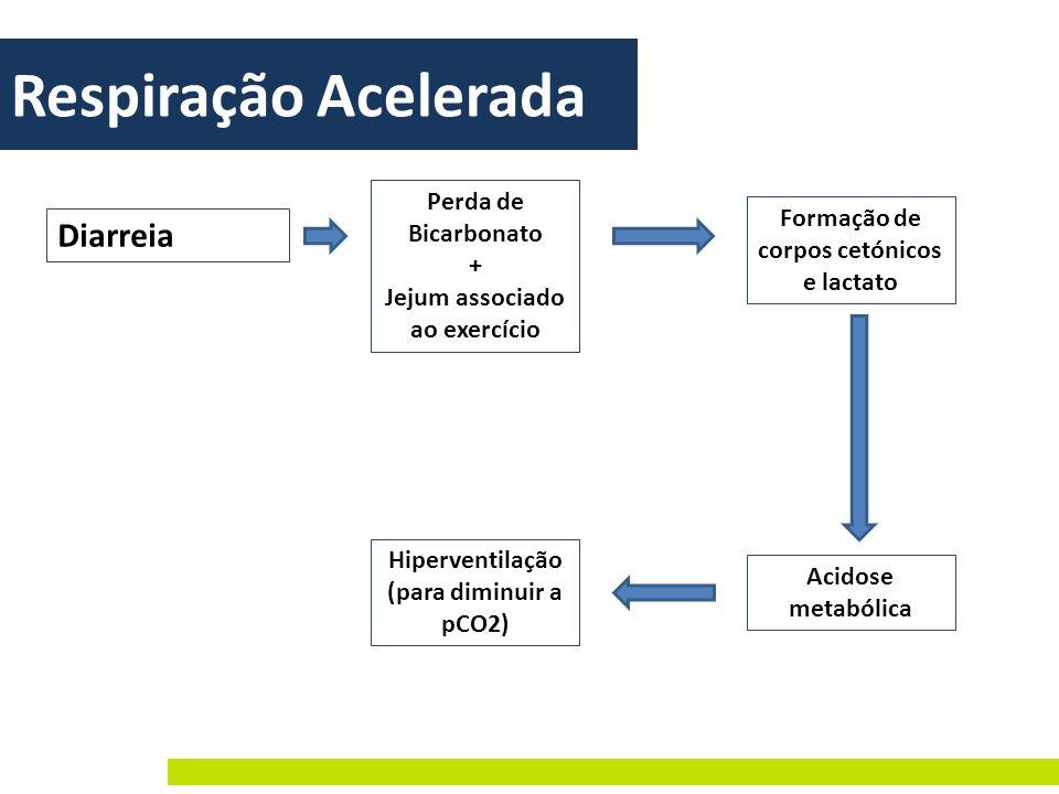 Respiração Acelerada Diarreia Perda de Bicarbonato