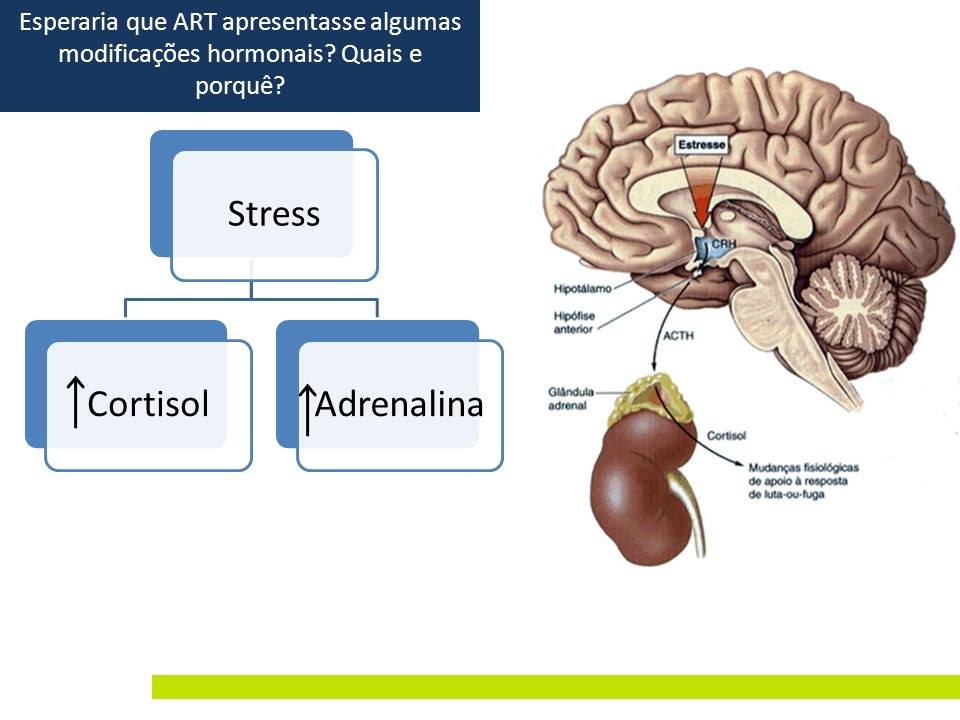 Stress Cortisol Adrenalina